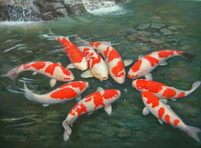 Cá Koi Kohaku giống cá koi Nhật bản đẹp